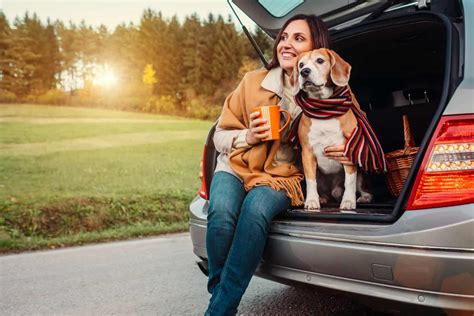 Tips For Traveling Alone With A Pet   GoPetFriendly