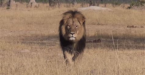 NRA's Ted Nugent: People Upset About The Killing Of Cecil